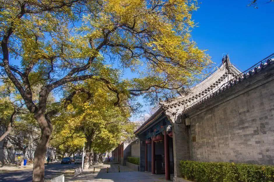 老北京的槐树,见证世代京城生活的?#21672;?#30334;味