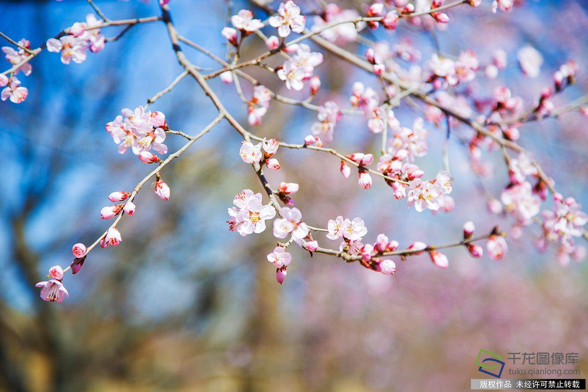 初春圓明園 美麗如詩畫