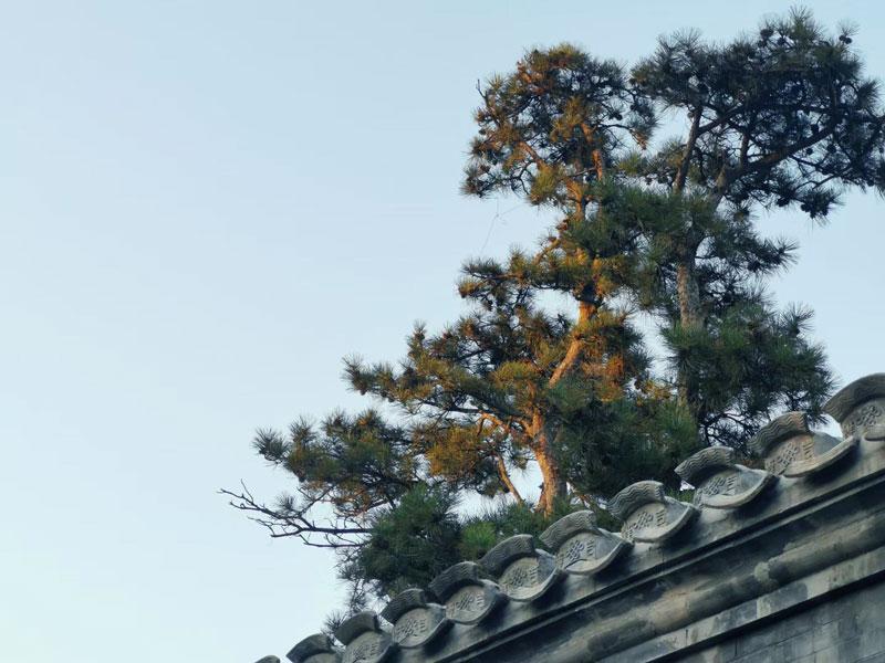 这座北京小院,给您一个居住办公融为一体的