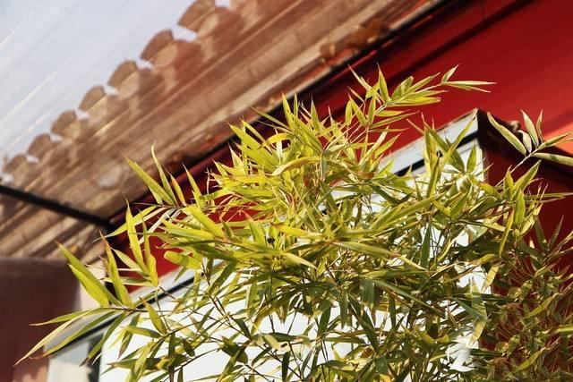 你家的四合院种竹子吗,有什么讲究?
